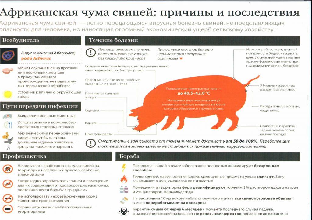 Вирус африканской чумы свиней был обнаружен у поросёнка в подсобном хозяйстве в